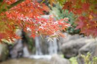 α700 で撮る紅葉 in 庄川水記念公園 その1