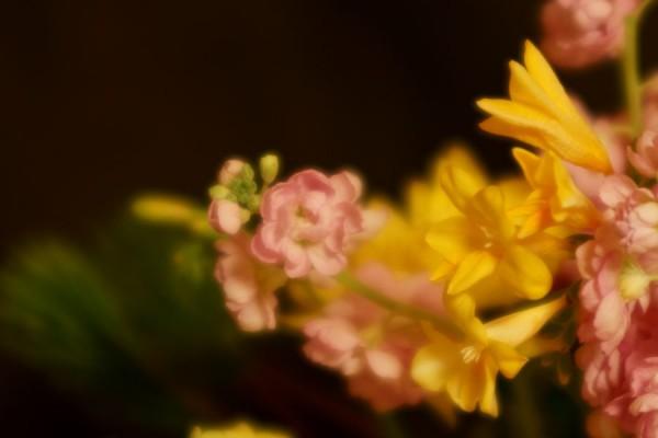 ソフトフォーカス花の習作1