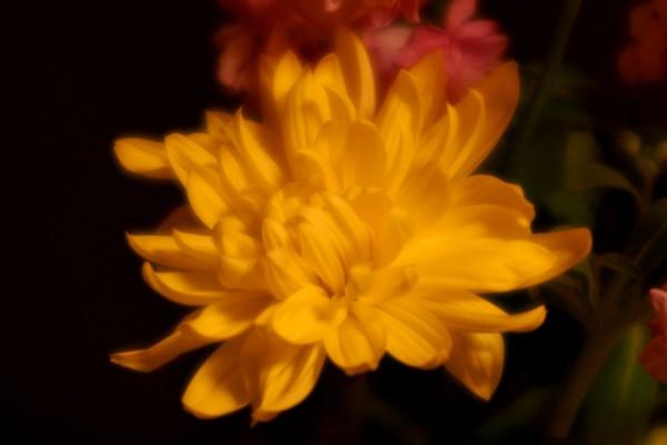 ソフトフォーカス花の習作2