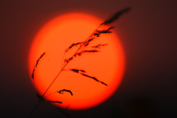 燃える穂影