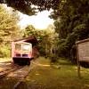 木曾森林鉄道DL140と木材運搬車 石川県森林公園