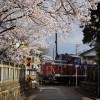 桜と踏切とディーゼル機関車