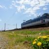 蒲公英と初夏の貨物列車